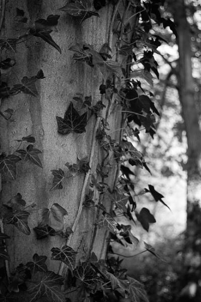 Poison Ivy by jacks_19