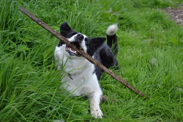 My Stick! by hannah4eva