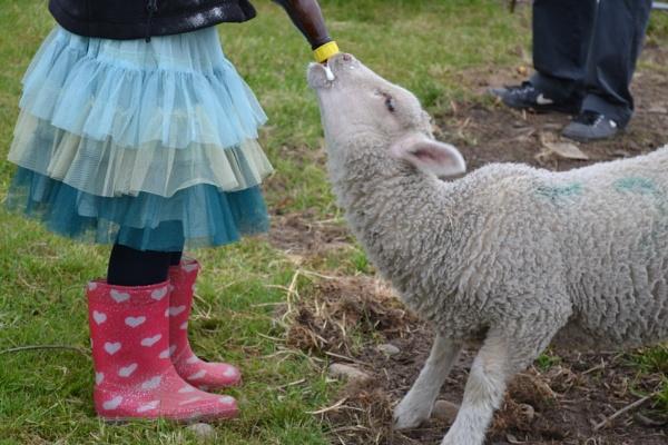 Feeding a Lamb in TuTu by hannah4eva