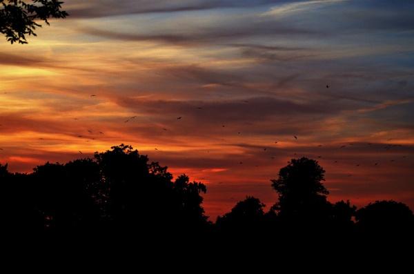 Birds at sunset by Redziggy