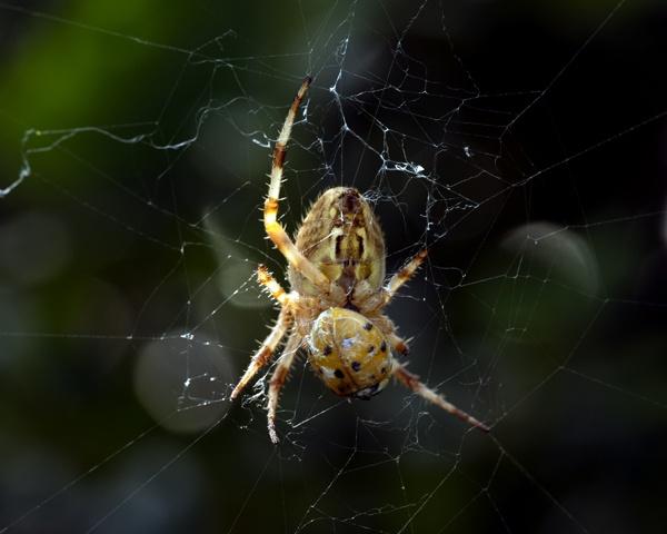 Spider and prey by victorburnside
