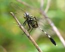 fly_backgarden_anirban