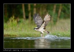 Nice Catch!
