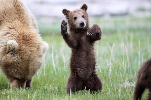 Bear cub by katep1