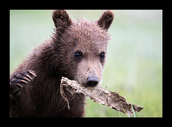 Bear cub 2 by katep1