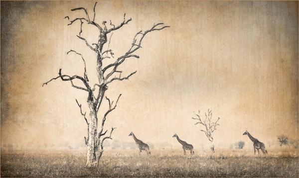 savannah by akprice
