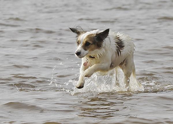 Fun in the sea by nigell