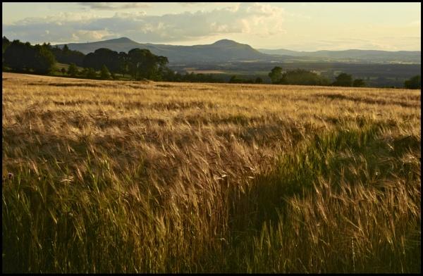 Lomond Hills, Fife by waineswitch