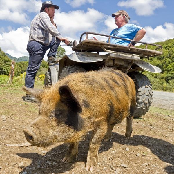 Stuart\'s Wild Pig by nworb