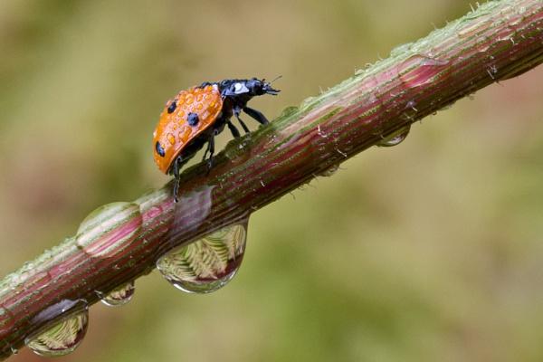 Ladybird by Steve012345