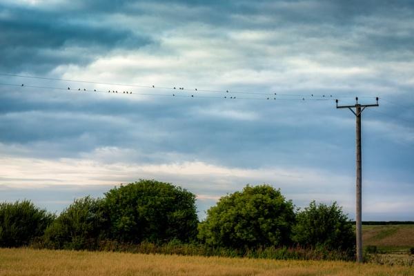 Birds on wire by EdricCross