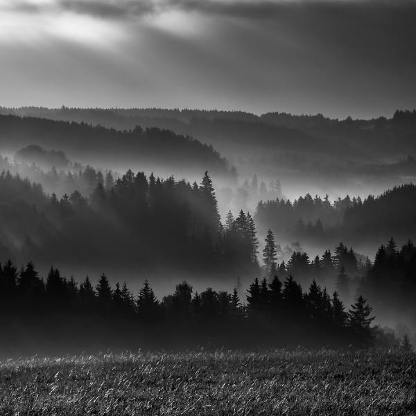 Forest dawn by megpie60