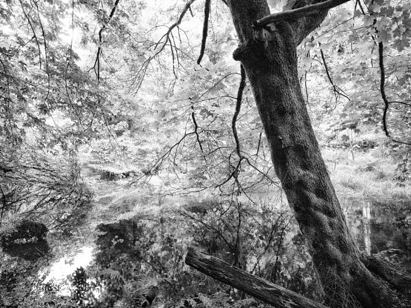 On water\'s edge by mlseawell