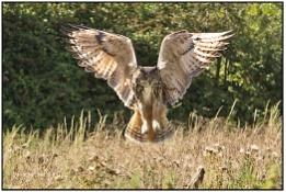 Kaln - Barn Owl Centre I