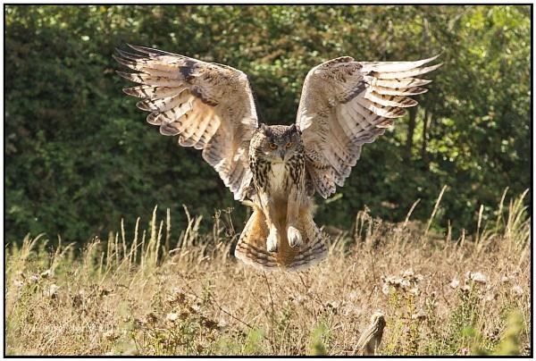 Kaln - Barn Owl Centre I by Louise_Morris