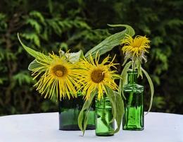 3 Green Bottles