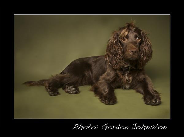 Dyson Dog by GFJ
