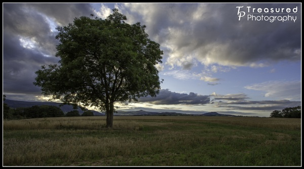 just a tree by madmatt