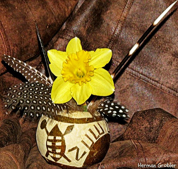 Daffodil from Africa by Hermanus