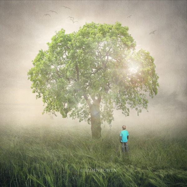 The Tree by Baden