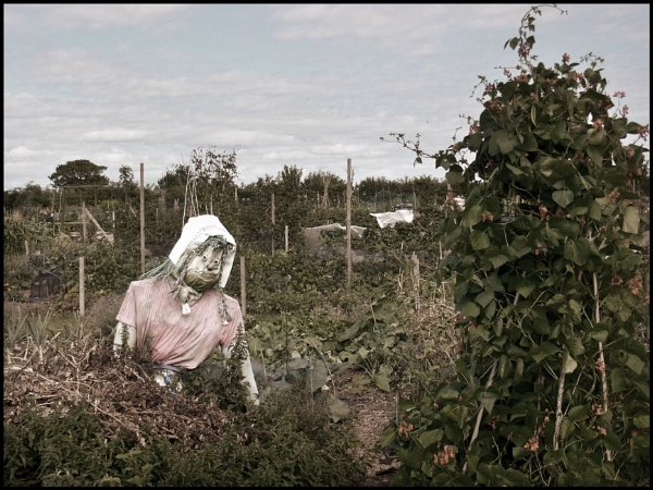 Scarecrow in the Allotments by bwlchmawr