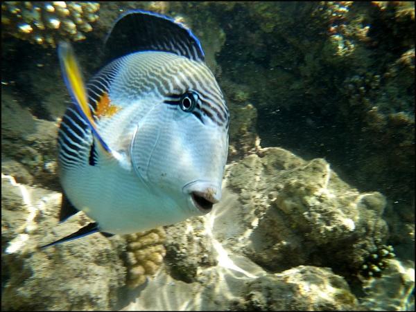 Snorkeling in Egypt by steve_fdr