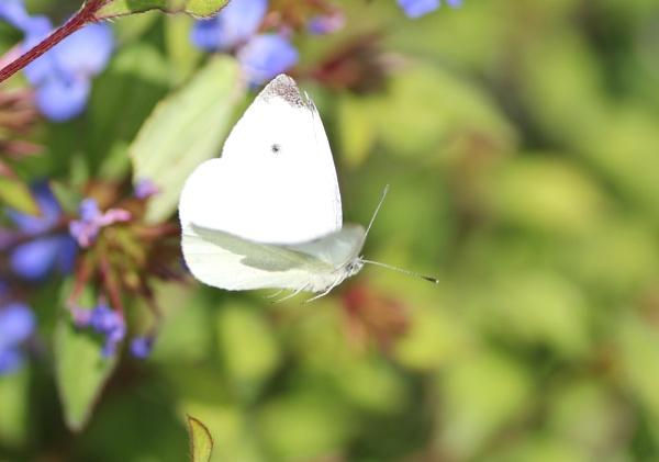 Flutter on by by loobylyn