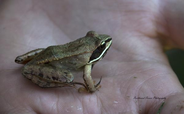 Feeling froggy by shutterbug8156