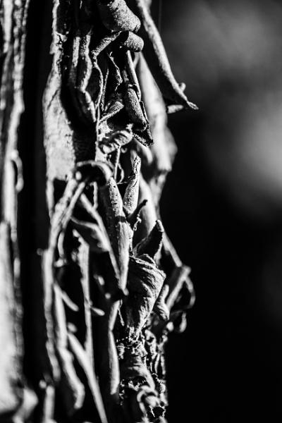 Bark 2 by derrymaine