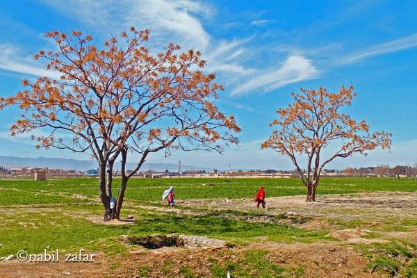 couple tree by nabil1