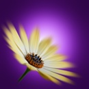 Purple Patch by bfgstew