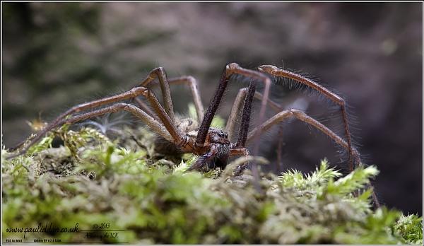 Monster by Paul_Iddon