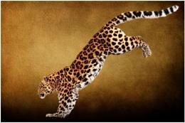 Amur Leopard 4