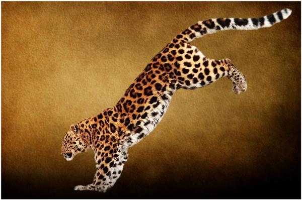 Amur Leopard 4 by iancatch
