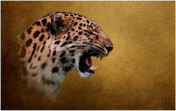 Amur Leopard 5 by iancatch