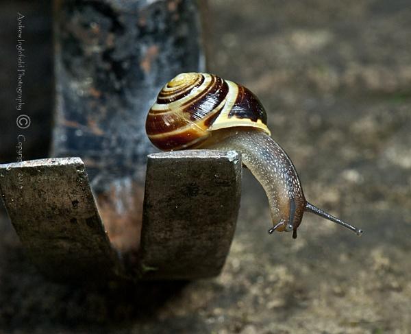 Hammer & Snail by Ingleman