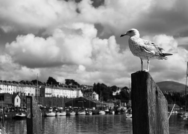 A Seagull. by szlatoszlavek