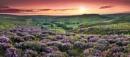 Yorkshire in glorious Technicolor