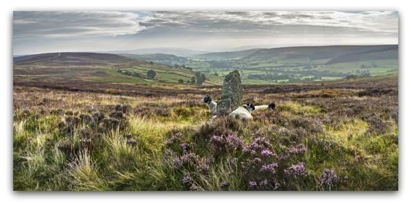 Glaisdale Moor by YorkshireSam
