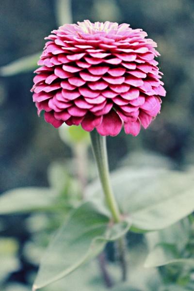Matte Flower by Brennak