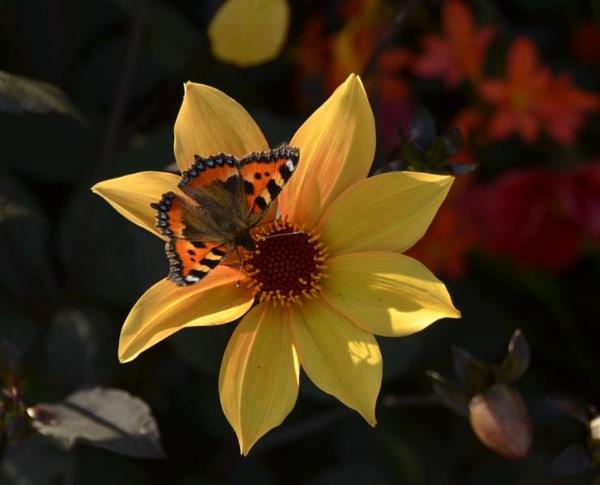 \'Flutterby\' by Margaret101