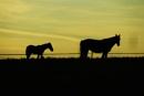 Dark horse by ast333
