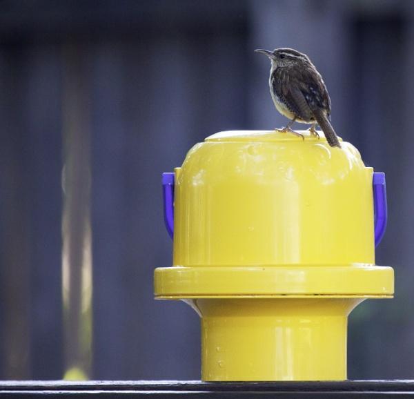 Birdie.... by v_equals