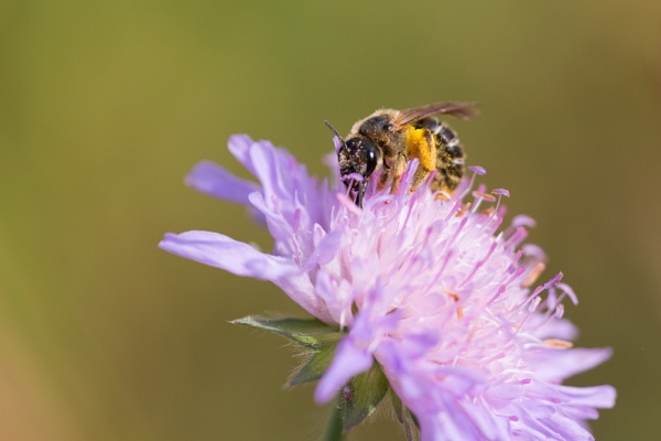 Covered in Pollen by livinglevels