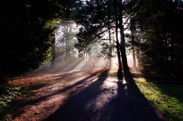 The autumn sun through the trees . by sandk