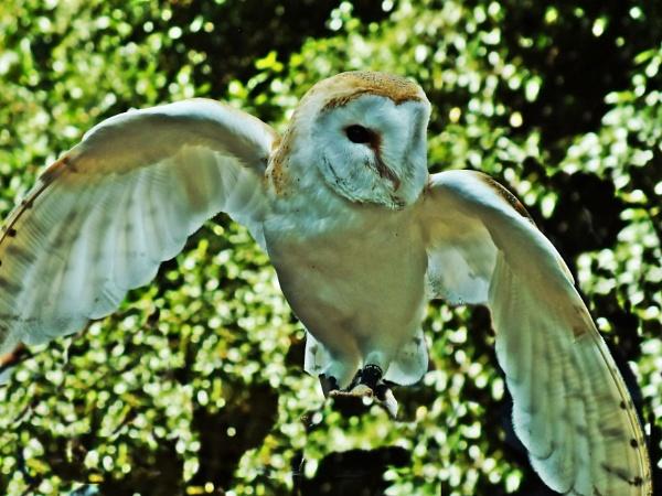 OWL...!!!!! by crissyb