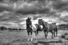 Hampshire Horses