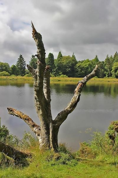 Dead Tree by lenocm