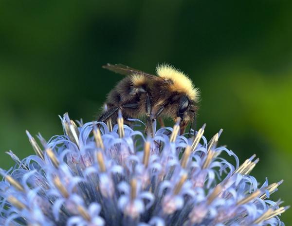 Bee by victorburnside
