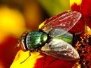 buzz off 2 by RosieLeopard